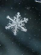 Эффект падающего снега Wordpress