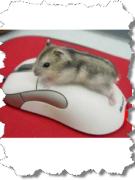Интересные факты о компьютерной мышке